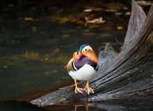 Beautiful And Colourful Mandar...