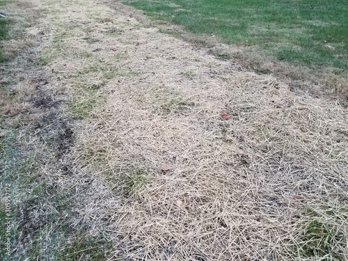 green grass or lawn with newly planted grass with straw