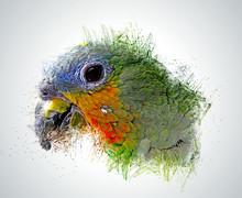 Head Parrot Color Pen