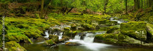 Obraz River through lush forest in Northern Ireland - fototapety do salonu