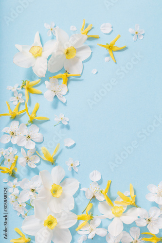 Fototapeta daffodils and cherry flowers on blue background background obraz
