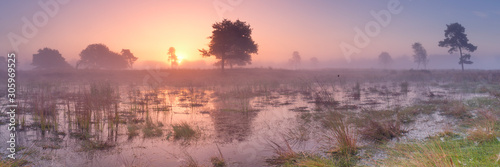 Fotografia Sunrise over wetland in The Netherlands