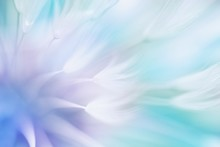 Soft Abstract Gradient Background , Abstract Dandelion
