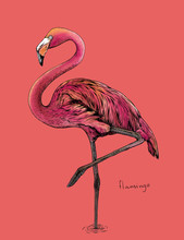 The Flamingo Bird On Pink Back...