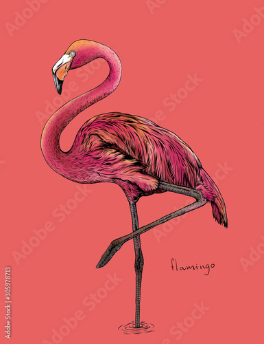 The flamingo bird on pink background,hand draw Fototapet