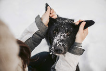 Black Dog Portrait With Human Hands Holding His Ears Outdoors In Winter