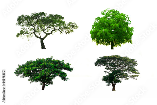 Isolated trees on white background , The collection of trees,set of eight green trees isolated on white background Fototapet