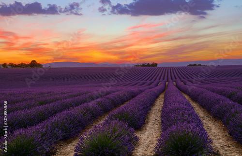 Foto auf Leinwand Aubergine lila Purple lavender field of Provence at sunset
