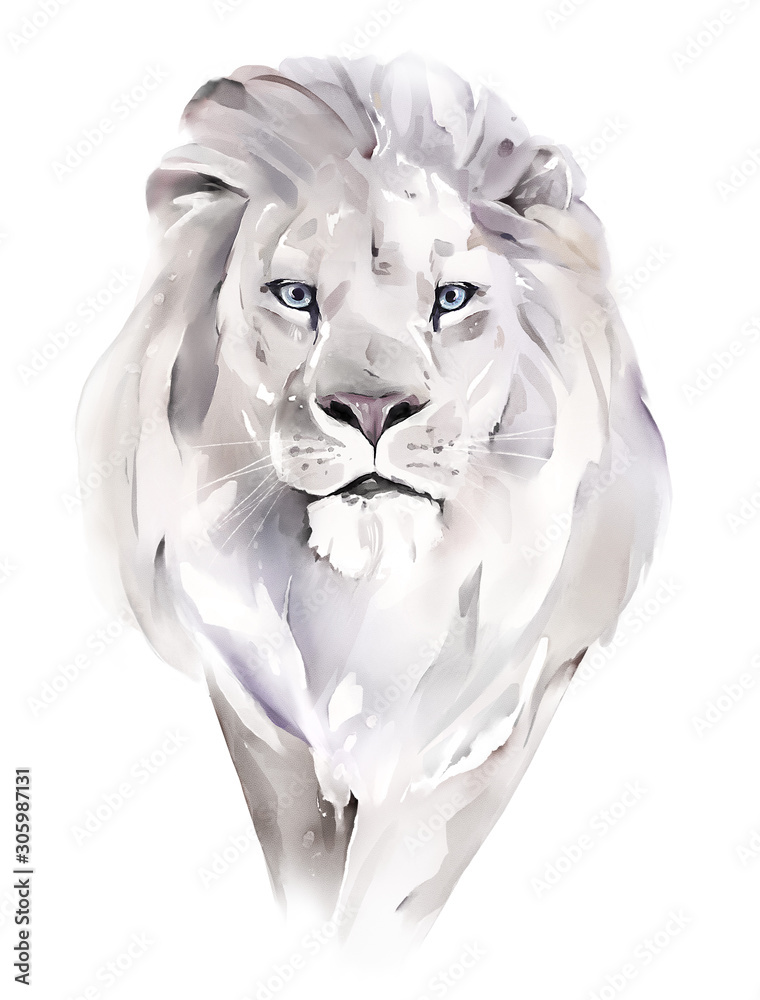 Fototapeta watercolor illustration. Drawing - lion isolated on white background
