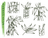 Set of isolated sketches of bamboo stalk