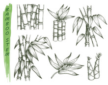 Set Of Isolated Sketches Of Ba...