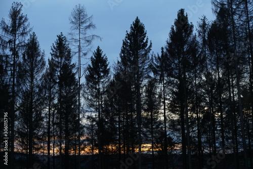 Foto auf Leinwand Darknightsky Winter Forest Evening