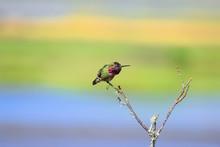 Cute Hummingbird Perched On A ...