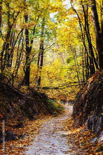 Beautiful and romantic autumn forest