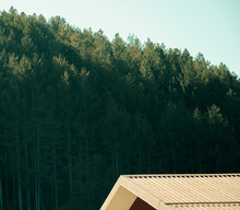 Green Mountain Trees - Camigli...