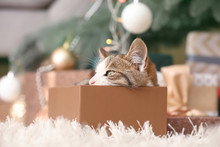 Cute Funny Cat In Christmas Gi...