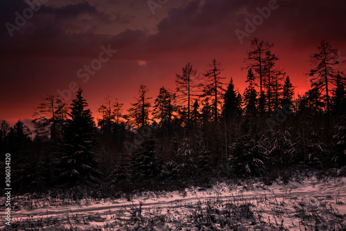Foto auf AluDibond Kastanienbraun Colorful sunset in the winter forest. Beautiful winter landscape in the mountains. Sunrise.