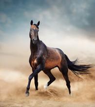 Akhal-teke Horse Running In De...