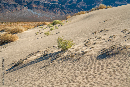 Sand dunes and mountains. Eureka Valley, Death Valley National Park, California