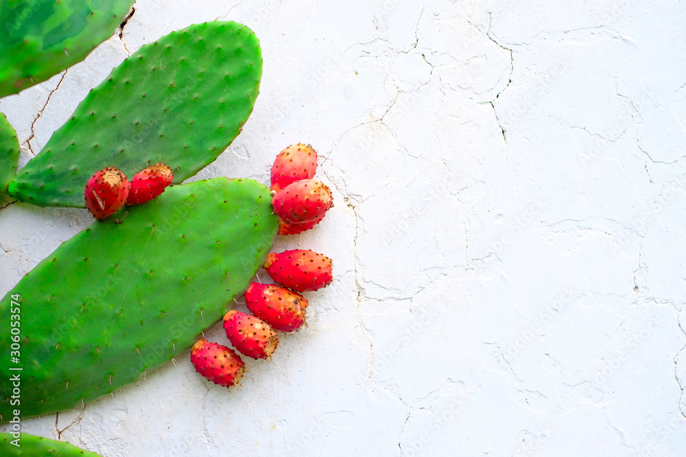 Fototapeta Ripe fruits of prickly pear (Opuntia) at a white wall.