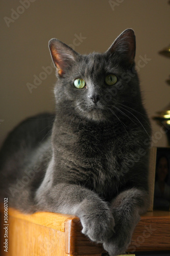 Grey Cat with Green Eyes Sitting and Looking