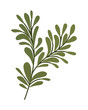 Isolated leaves icon vector design