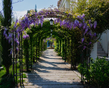 Arch Surrounded By Flowers In ...