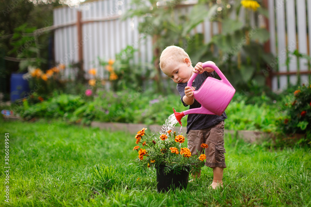 Fototapeta Child boy watering flowers in garden from can