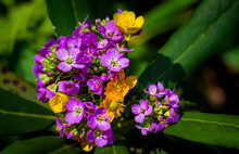 Purple And Yellow Flowers On Green Background