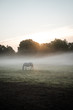 Morning horse