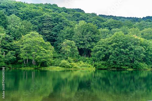 Fototapeta 五色沼 Goshiki-numa lake in Nishikawa-machi, Yamagata Prefecture, Japan obraz na płótnie