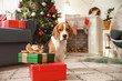 Cute dog with gifts in room decorated for Christmas