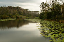 Lake In The Forest. Autumn In Acar Langozu, Yellow Green Leafy Trees And Water Lilies, Sakarya, Turkey.