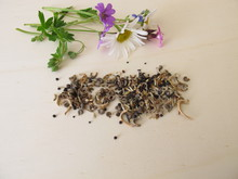 Bee Friendly Seed Mixture And ...