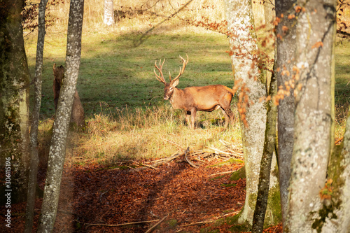 Foto auf Gartenposter Bestsellers stag in the forest