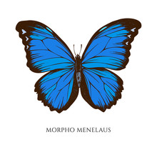Vector Set Of Hand Drawn Colored Morpho Menelaus