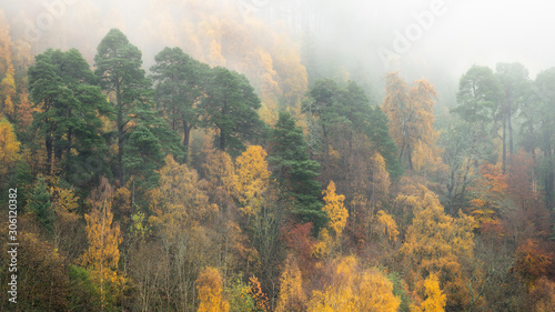 Beautiful autumn colours during a beautiful misty morning in Scotland. Scotland is really beautiful in autumn with all the different colors in the forests.