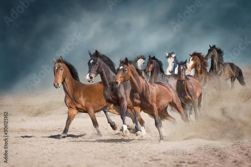 Obraz Stado koni w pustynnym pyle na tle burzowego nieba - fototapety do salonu
