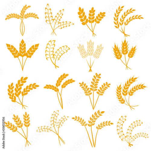 Obraz Wheat or barley ears. Harvest wheat grain, growth rice stalk and whole bread grains or field cereal nutritious rye grained agriculture products ear symbol. Isolated vector icons set. - fototapety do salonu