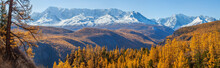 Panoramic Autumn View, Sunny Day.  Nature Of Siberia, Wild Place. Mountain Taiga, Snow-capped Peaks.