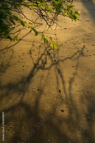 Shadow of tree branches on a black sand beach at Papagayo Bay. Wallpaper Mural