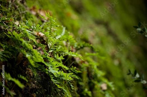 Mousse et fougère Billede på lærred