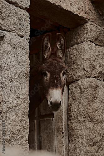 burro Fototapet