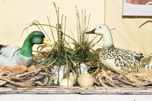 Ducks And Eggs In A Decorated Window Display 6439-042