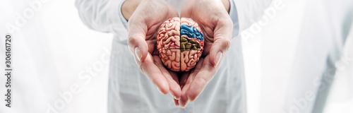 Obraz panoramic shot of doctor holding model of brain in clinic - fototapety do salonu