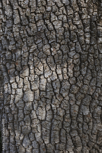 Texture of the bark of old tree with shadows. - 306164388