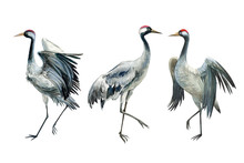 Set Of Beautiful Birds Crane O...