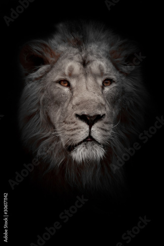Fototapety, obrazy: Moon lion portrait. Portrait full face. powerful male lion with a chic mane impressively lies.