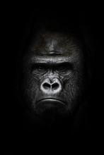 Face  In The Dark. Portrait Of...