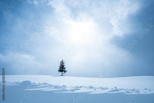 Fotomural 冬美瑛の丘